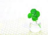 【塾長日記⑭】幸福は小さく、短い。人生がそうであるように