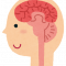 人間の脳のピーク年齢